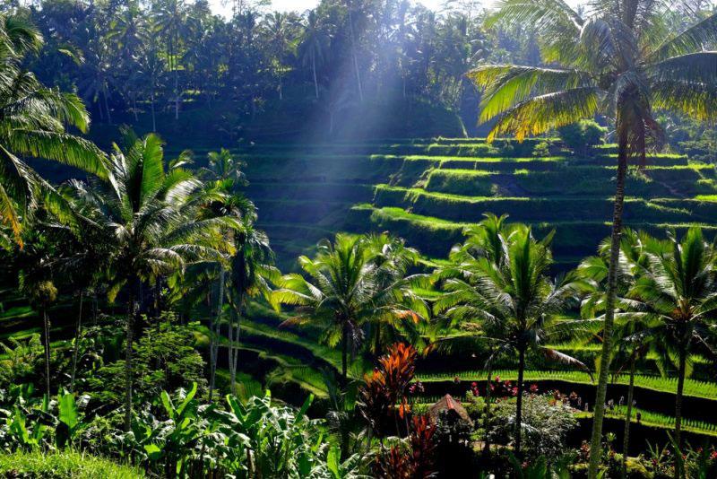 Desa Kendran Is Our Village Alam Ubud Villa